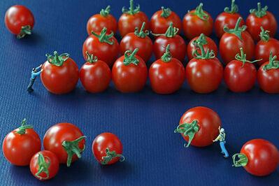 Christopher Boffoli, 'Tomato Organizers', 2012