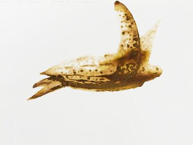 Alexis Rockman, 'Leatherback Turtle (Dermochelys coriacea)', 2014