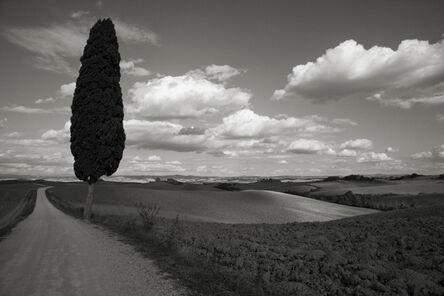 Cara Weston, 'Lone Tree, Italy'