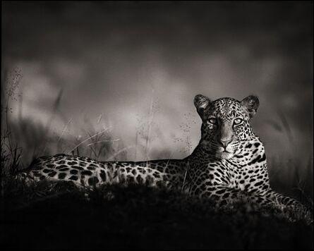 Nick Brandt, 'Leopard Staring, Masai Mara 2010', 2010