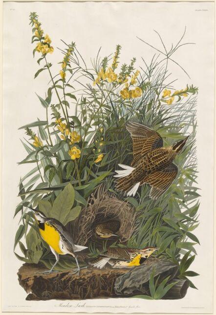 Robert Havell after John James Audubon, 'Meadow Lark', 1832