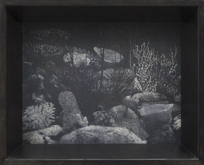 Patrick Van Caeckenbergh, 'Corals of Australia and the Indo-Pacific (spring 2013)', 2013