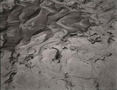 Linda Connor, 'Scorpion', 1982