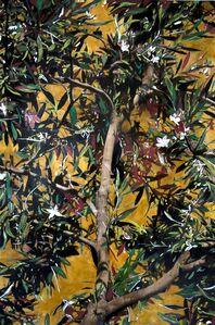 Ayline Olukman, 'Blooming Tree', 2017