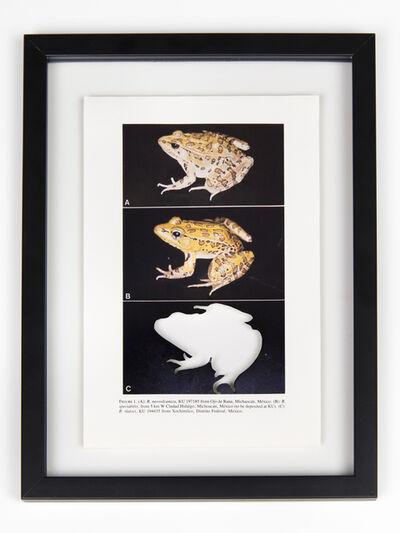 Brandon Ballengée, 'RIP Tlaloc's Leopard Frog: After David M. Hillis, 1985', 2014