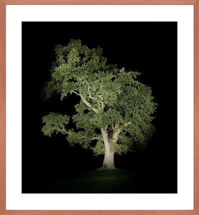 Ralf Peters, 'Baum #5', 2012