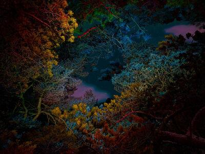 Linda Westin, 'Illuminated Dendrology - Tunneling 2', 2020