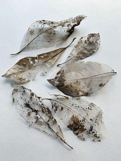 Ellen Denuto, 'Leaf Skeletons', 2020