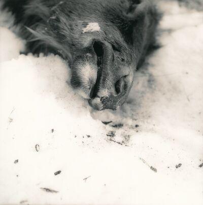 Ken Rosenthal, 'Frozen', 2010