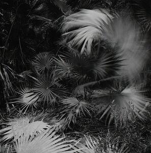 Heather Boose Weiss, 'El Habitat de Sian Ka'an', 2010