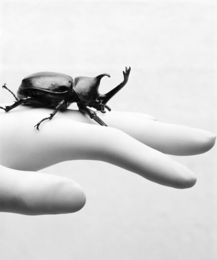 Kim Dong Wook, 'Plastic syndrome - Beetle', 2018