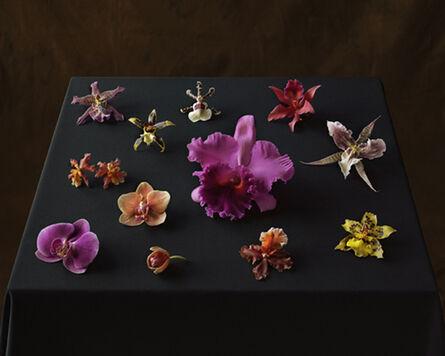 Tom Baril, 'Twelve Orchids (852)', 2007