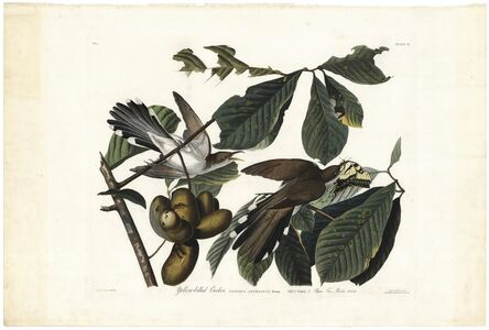 John James Audubon, 'Yellow-Billed Cuckoo.  Coccyzus Americanus.  Plate 2.', 1827-1838