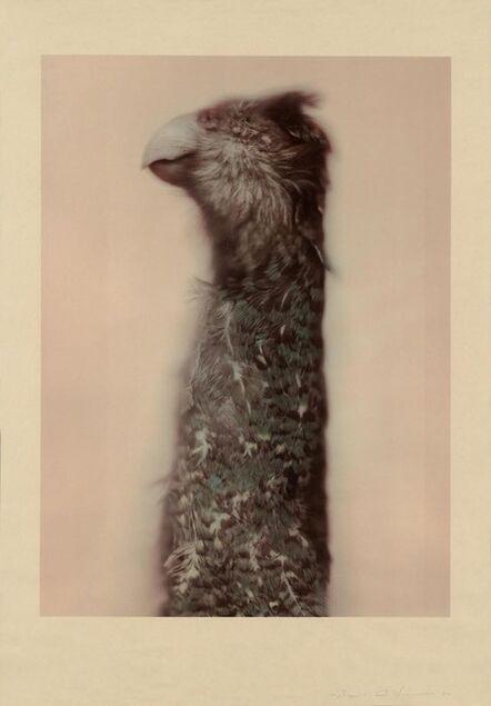 Ann Hamilton, 'Kakapo Ground Parrot', 2017