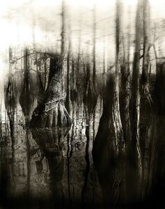 Alain Lefort, 'Florida Trail II', 2013