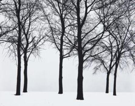 Harry Callahan, 'Chicago (Trees in Snow)', 1950