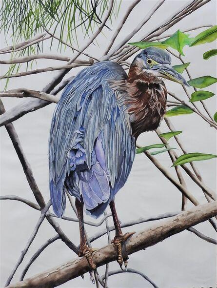 Carol Dawson, 'Peering: Green Heron', 2020