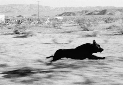John Divola, 'Dogs Chasing My Car in the Desert, D29F33', 1996/2001