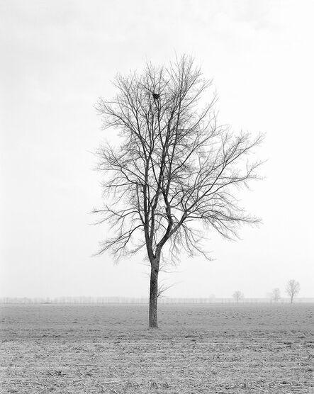 Paola De Pietri, 'Untitled 013, Questa Pianura series', 2004