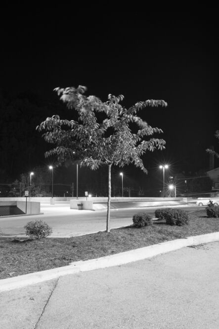 Adam Neese, 'Four Well Lit Trees in Texas and One in Tennessee 5', 2015
