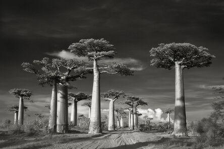 Beth Moon, 'Avenue of the Baobabs, Morondava, Madagascar.', 2006.