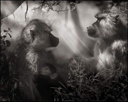 Nick Brandt, 'Baboons in Profile, Amboseli 2007', 2007
