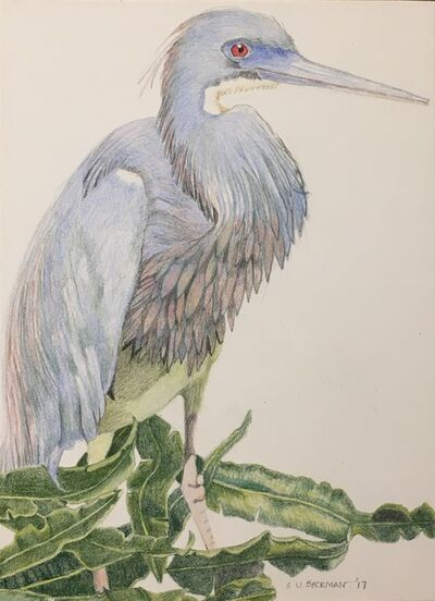 Sylvia Beckman, 'Tri-Colored Heron', 2017