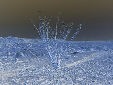 Richard Misrach, 'Untitled', 2008