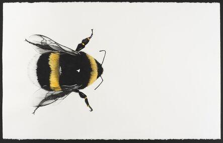 Rose Corcoran, 'Bumble bee', 2020