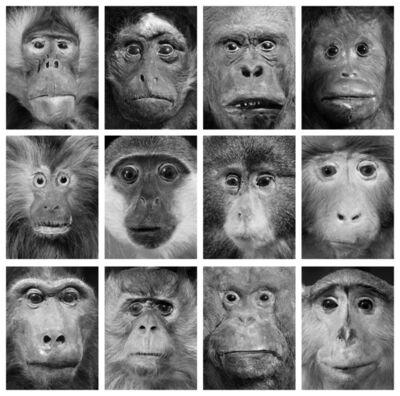 Oleg Kulik, 'Dead Monkeys', 1998