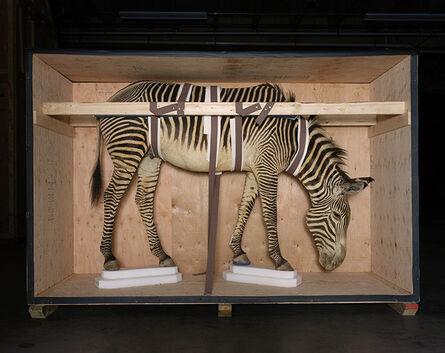 Richard Barnes, 'Smithsonian Zebra from Animal Logic ', 2005
