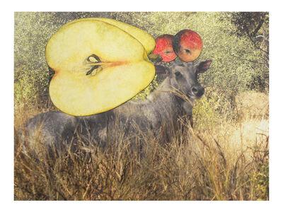 Avishek Sen, 'Untitled', 2014
