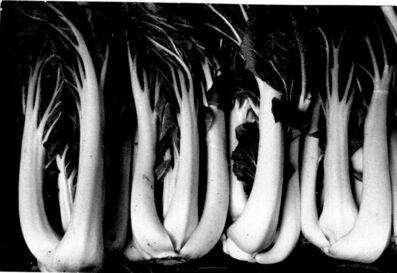Ernst Haas, 'Chard', ca. 1980