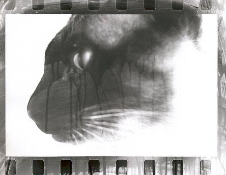 Walter Schels, 'Cat', 1980