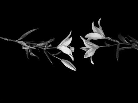 Axel Breutigam, 'Lilies', 2021