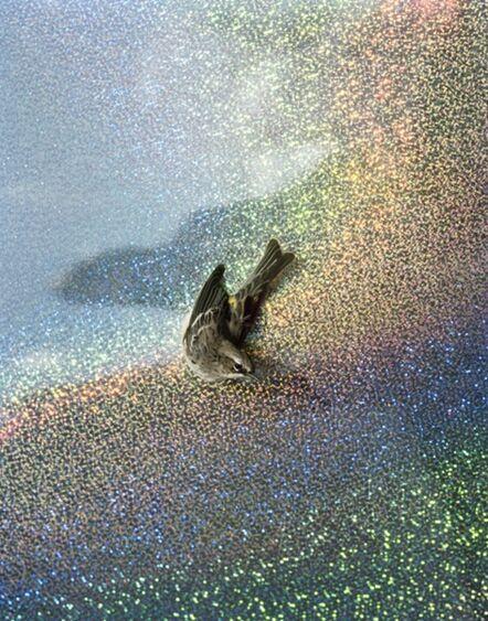 Yola Monakhov Stockton, 'Untitled. Yellow-Rumped Warbler.', 2013