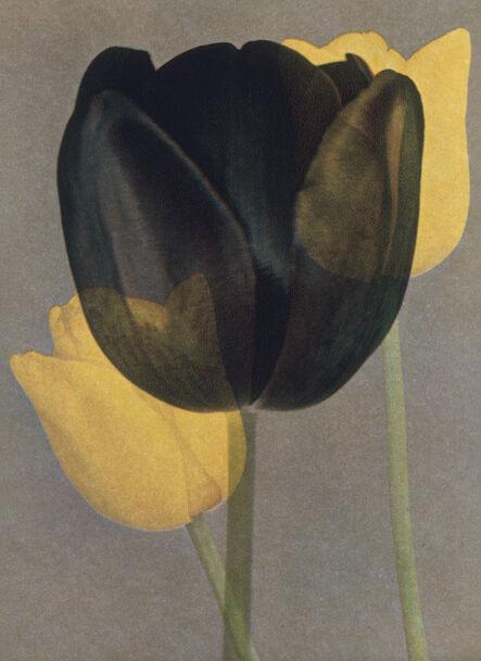 """Rémy Markowitsch, 'Asian Option from """"Bullish on Bulbs""""', 2007"""