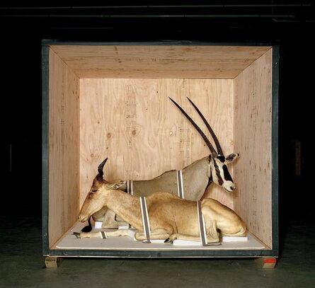 Richard Barnes, 'Smithsonian Antelope From Animal Logic', 2005