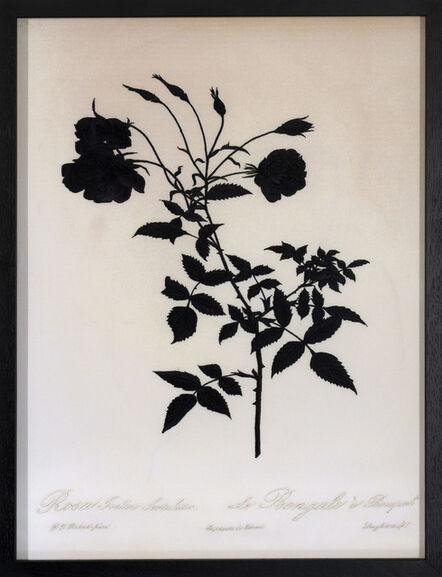David Chalmers Alesworth, 'Dark Rosa indica Sirtulata (Bengal)', 2021