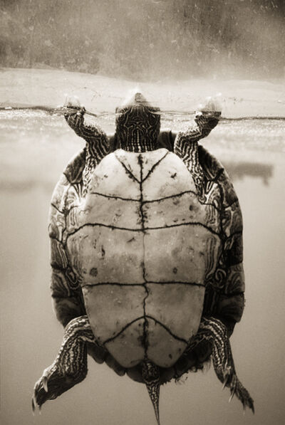 Henry Horenstein, 'Texas Map Turtle, Graptemys Versa'