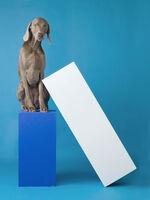 William Wegman, 'Lean To ', 2014