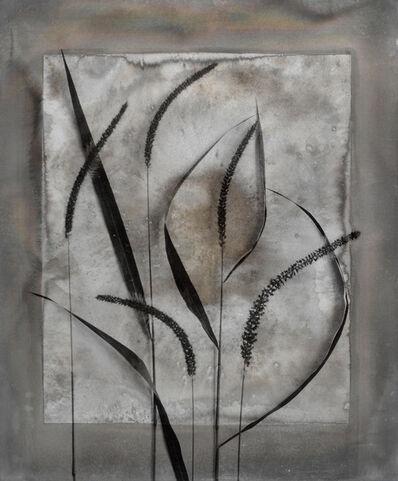Alida Fish, 'Fuzzy Grass', 2017