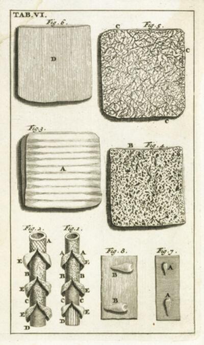 Steven Blankaart, 'Tab. VI', 1695