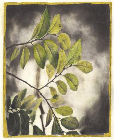 Brigitte Carnochan, 'Leaves', 2019