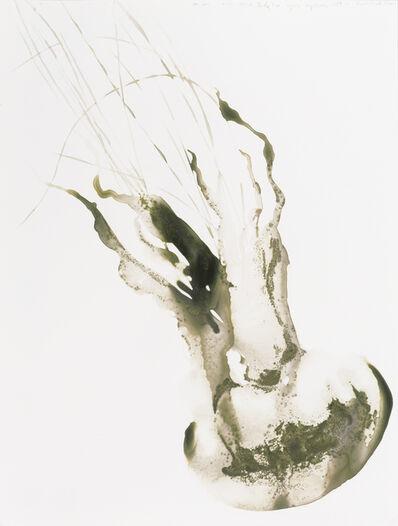 Alexis Rockman, 'Lion's Mane Jellyfish (Cyanea capillata)', 2014