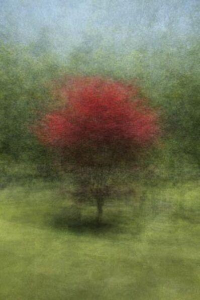 Tori Foster, 'Japanese Maple', 2012