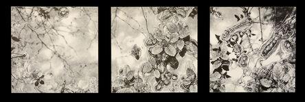 Robin Cole, 'Microcosm (Triptych)', 2015
