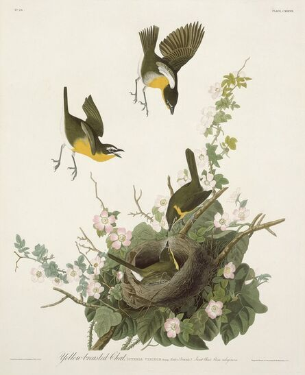 Robert Havell after John James Audubon, 'Yellow-breasted Chat', 1832