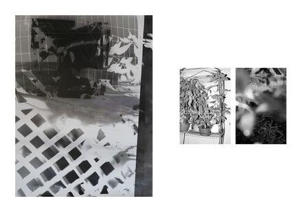 Bryan Graf, 'Shot/Reverse Shot, Studio Gardening at Night #2, July 26, 2020', 2020
