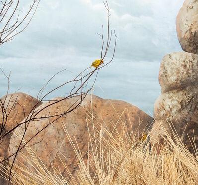 Eric Pillot, 'Weaverbird, Cloudy Sky and Boulder', 2015